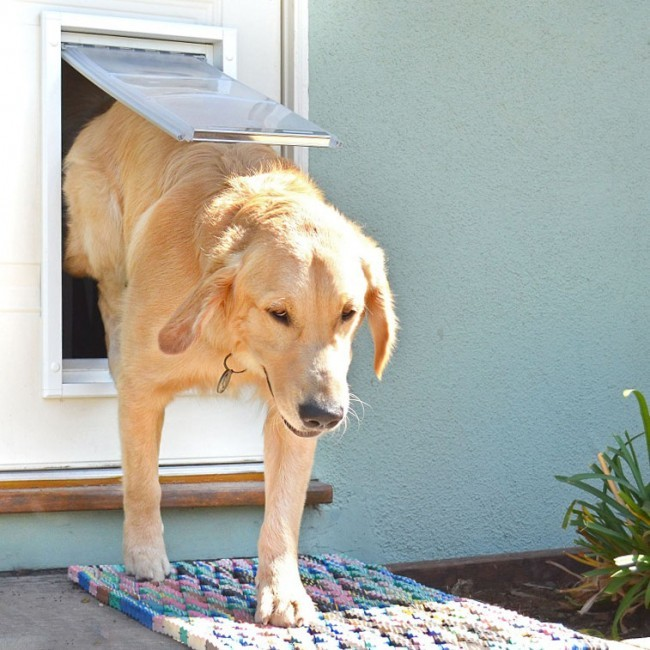 Installing A Pet Door Plano Texas Handyman